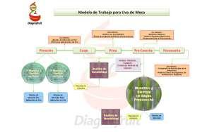 modelo-trabajo-uva-de-mesa