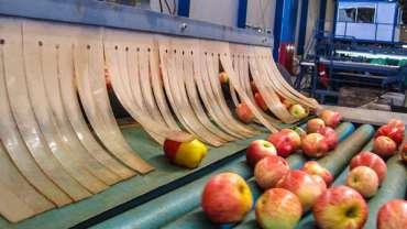 seguimiento-embalaje-manzana