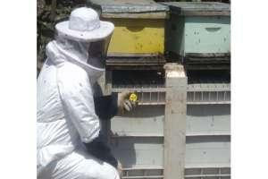 monitoreo-entrada-de-abejas